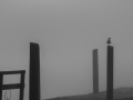 Dock Sunrise BW